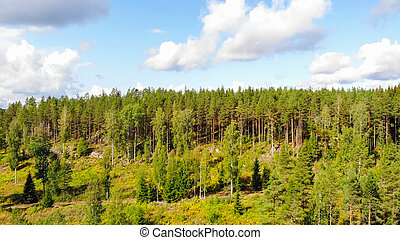 Aerial view of forest on a summer sunny day in Finland. Drone photography