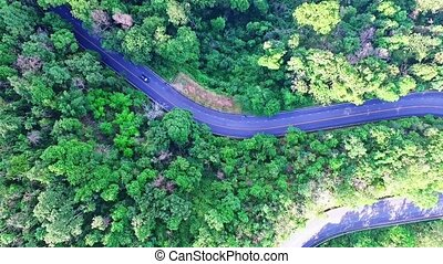 Aerial View of Forest Road