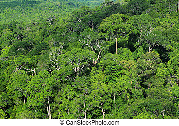 Aerial view of forest, Thailand