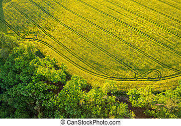 Aerial view of forest with blooming rape field