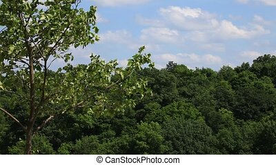 Aerial view of forest with sky, HD
