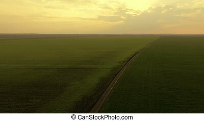 Aerial view of gold sunset on a background of green fields