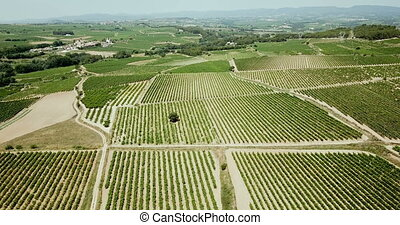 Aerial view of Grape plants in Spain
