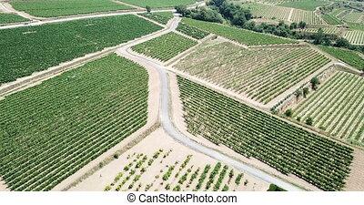 Grape plants in Spain - Aerial view of Grape plants in Spain