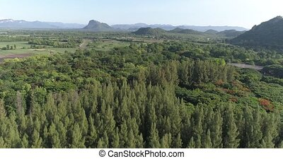 Aerial view of green fields in Thailand - Aerial drone view...