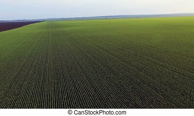 Aerial view of green fields, shoots, sky, fast moving