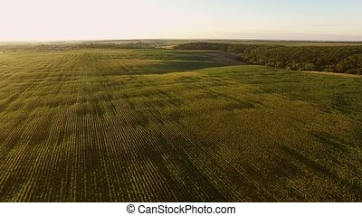 Aerial view of green fields. Cloudless sky and horizon. Live...