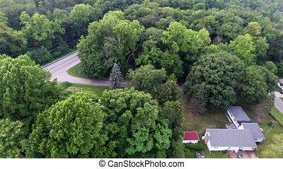 Aerial view of green forest treetop