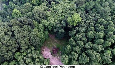 Forest top view aerial trees and branches from above in air plane flight