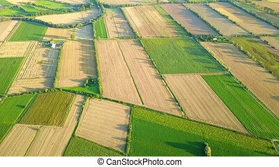 Aerial view of green plantations