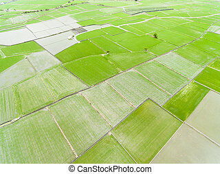 aerial view of green rice field in Taiwan at spring