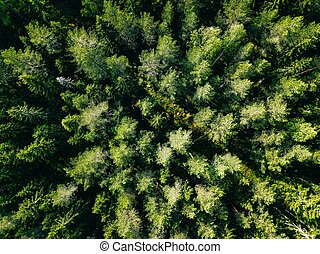 Aerial view of green summer forest.