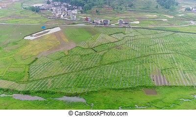 Aerial view of green terraced rice and field farms in poor village in China, Asia.