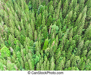 aerial view of green tree forest from the drone