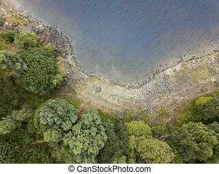 Aerial view of green trees on the lake shore