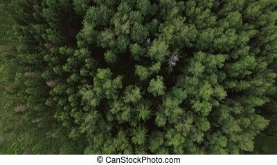 Aerial view of green woods and village houses, Russia