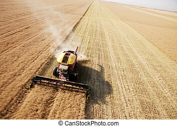 Aerial View of Harvest in Field - Combine harvesting canola...