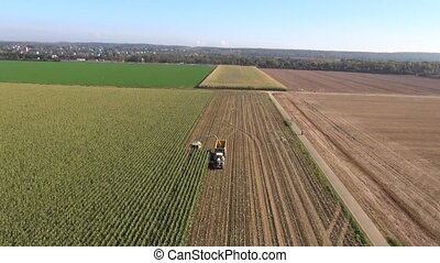 Aerial view of harvesting corn for