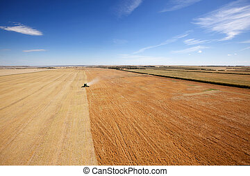 Aerial View of Harvesting - Aerial view of a combine...