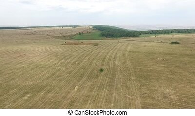 Aerial view of hay bales in agriculture field in rural. Russia, Stavropol.