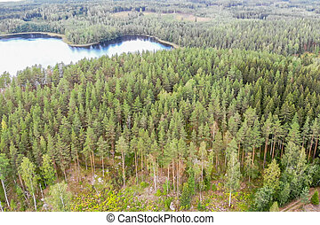 Aerial view of lake and forest on a summer sunny day in Finland. Drone photography