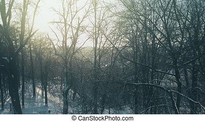 Aerial view of leafless trees in snowy park against blazing sun