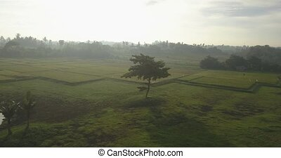 Aerial view of lone tree in field,