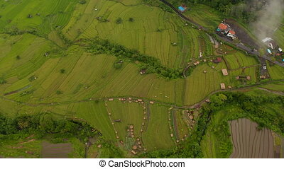 Aerial view of lush green terraced paddy fields in Bali. Rotating aerial view of farm rice fields in tropical rural countryside 4K