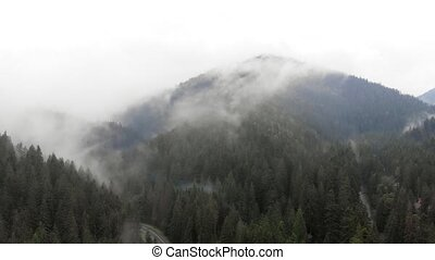 Mist clings to the tops of evergreen trees in this temperate rainforest on the slopes of Carpathian Mountains of Ukraine.