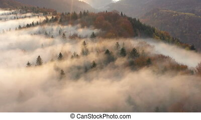 aerial view of misty foggy morning autumn mountains with the clouds floating through the pine forest trees at the beams of rising sun