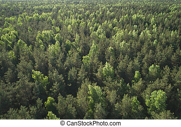 aerial view of mixed forest on a sunny summer day