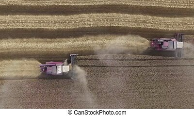 Aerial view of modern combine harvesting wheat on the field. Flying directly above combine. Agriculture scene. 4K