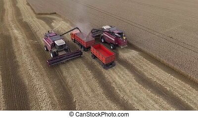 Aerial view of modern combine harvesting wheat on the field. The harvester unloads grain into truck