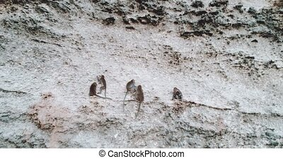 Aerial view of monkeys sitting on the limestone cliff -...
