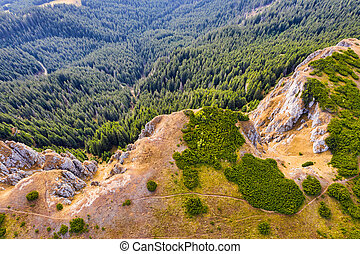 Aerial view of mountain forest