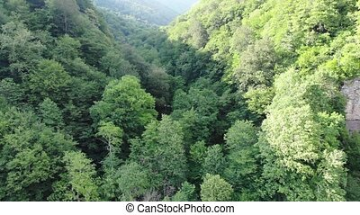 Drone flying over green trees overlooking mountain peaks and hills covered with forest. Aerial view of mountain valley, sunny day. 4K