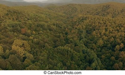 Aerial View of Mountains and Forest