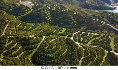 Aerial view of orange tree groves on hills creating an...