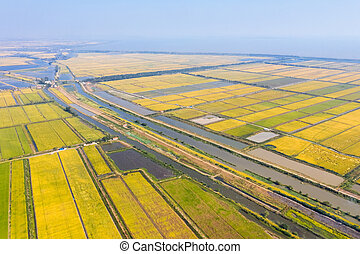 paddy field and lake in autumn