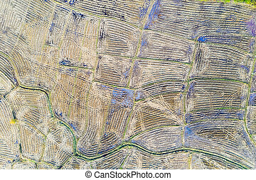 aerial view of paddy fields after harvest
