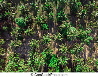 aerial view of palm trees plantation