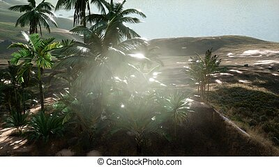 Aerial View of palms on sand dunes near the sea