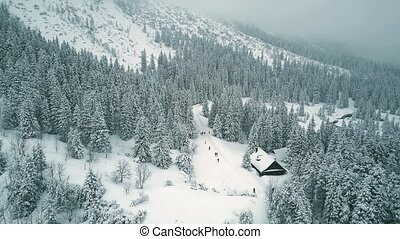 Aerial view of people hiking in winter forest - Aerial view...