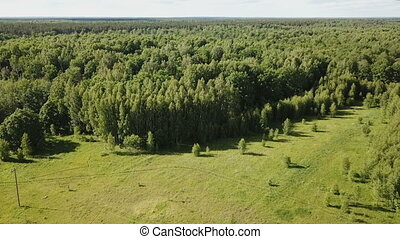 picturesque forest landscape in central Russia on summer day