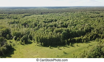 view of picturesque forest landscape in central Russia on summer day