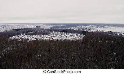 Aerial view of pine forest at winter