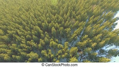 Aerial View of Pinetrees. 44k, 25fps - 4k aerial footage fly...