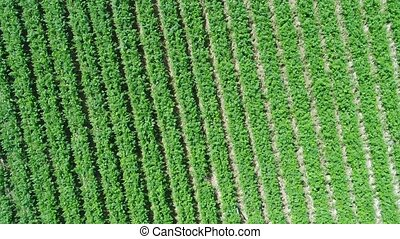 aerial view of plantation field