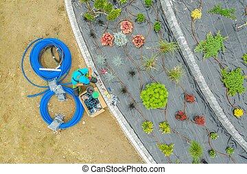 Backyard Garden Irrigation