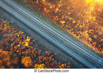 Aerial view of railroad in beautiful forest at sunset in autumn